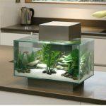 Achat aquarium