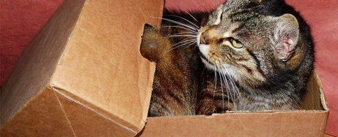 Les boites de rangements : classer et ranger ses documents